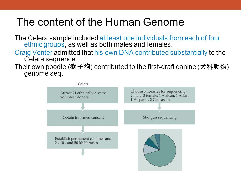 The content of the Human Genome