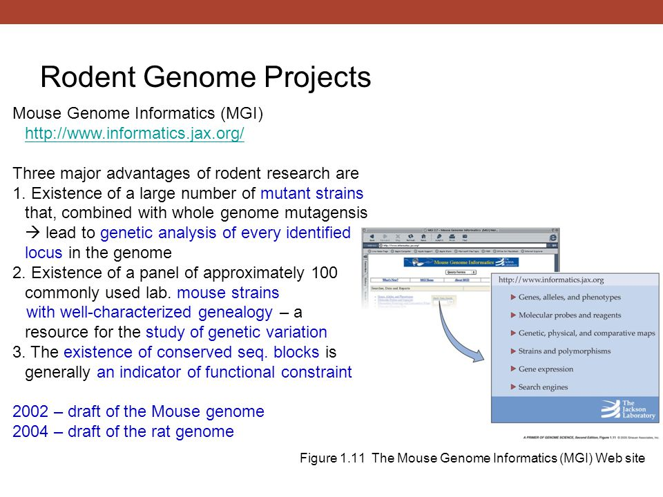 Figure 1.11 The Mouse Genome Informatics (MGI) Web site