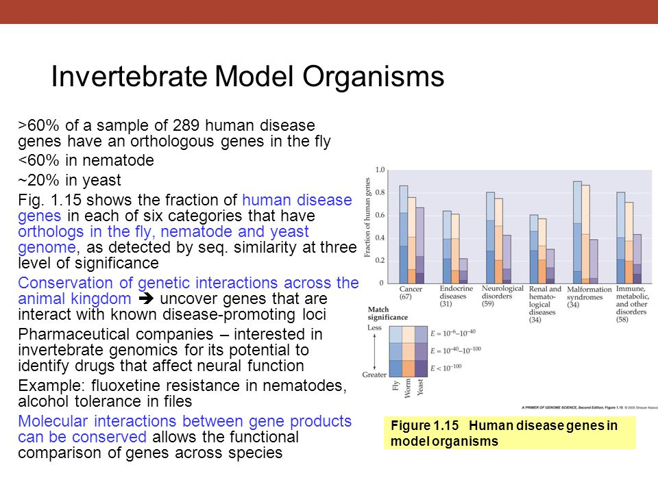 Figure 1.15 Human disease genes in model organisms