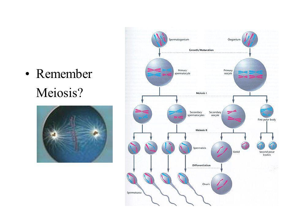 Remember Meiosis