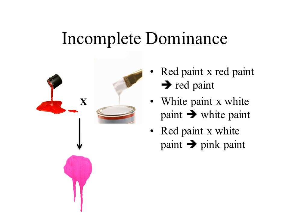 Incomplete Dominance Red paint x red paint  red paint