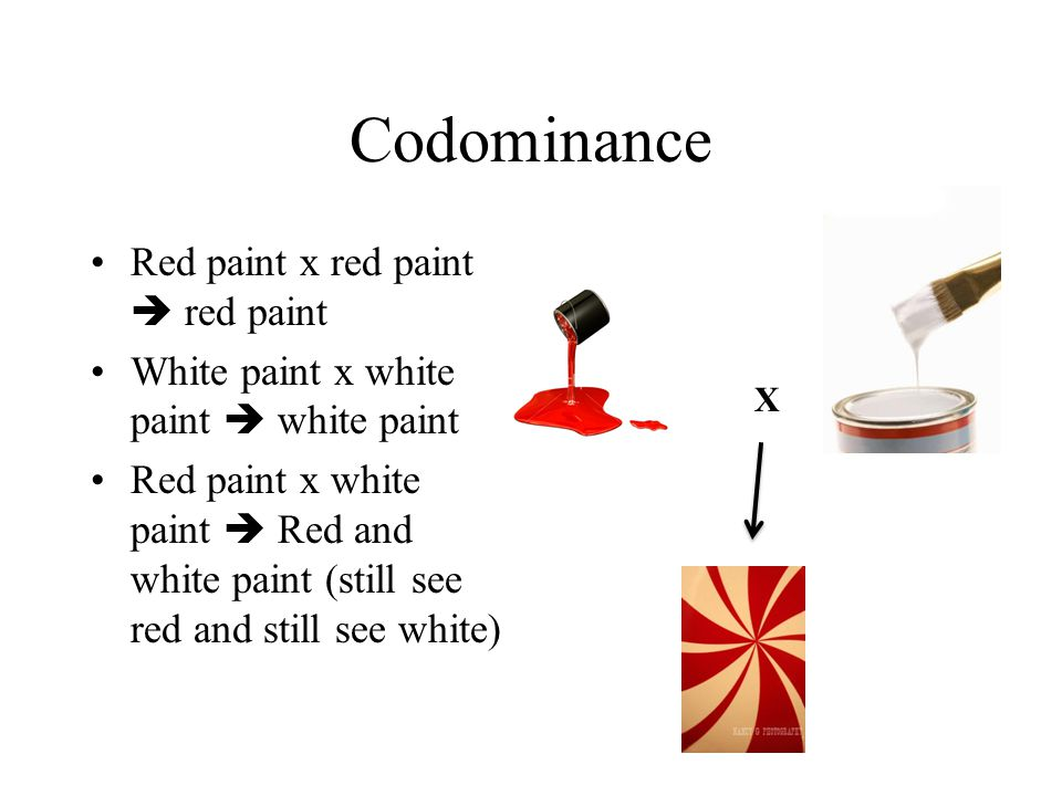 Codominance Red paint x red paint  red paint