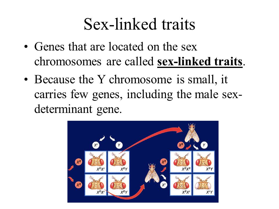Sex-linked traits Genes that are located on the sex chromosomes are called sex-linked traits.