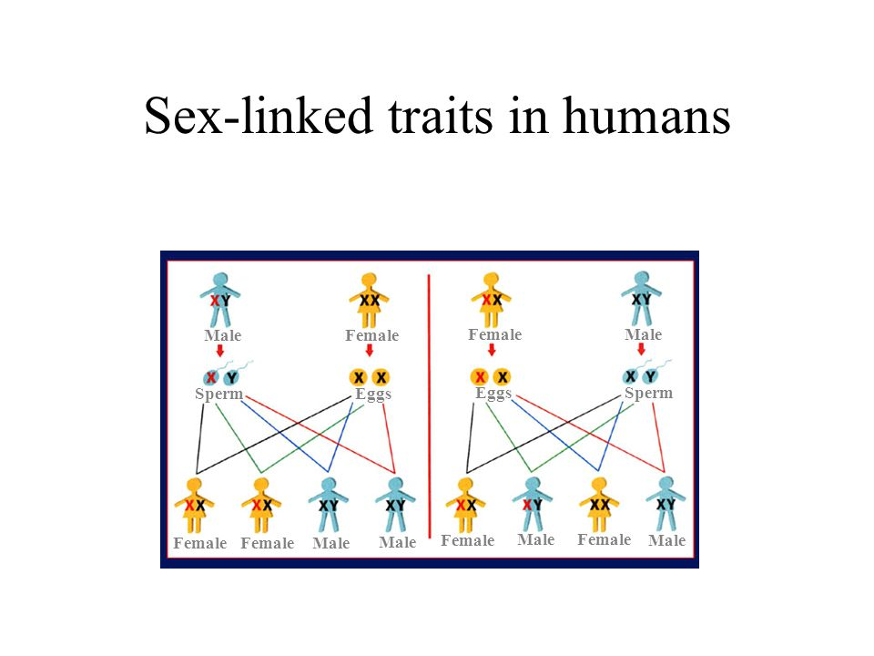Sex-linked traits in humans