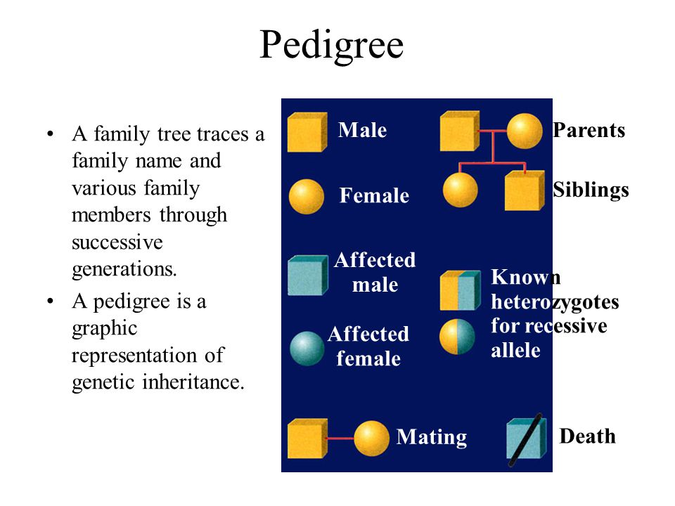Pedigree A family tree traces a family name and various family members through successive generations.