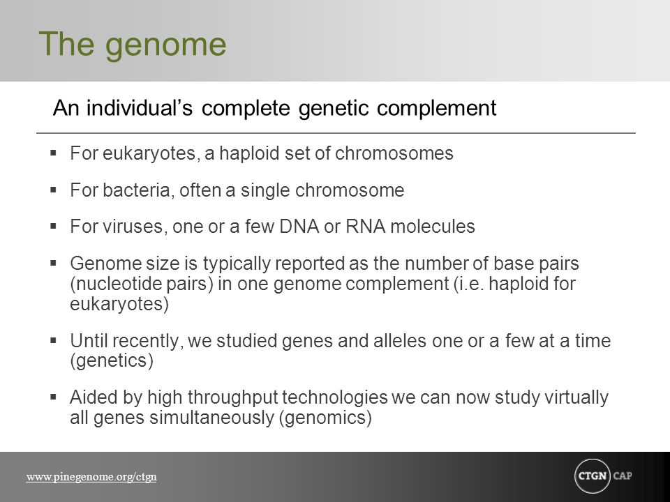 The genome An individual's complete genetic complement