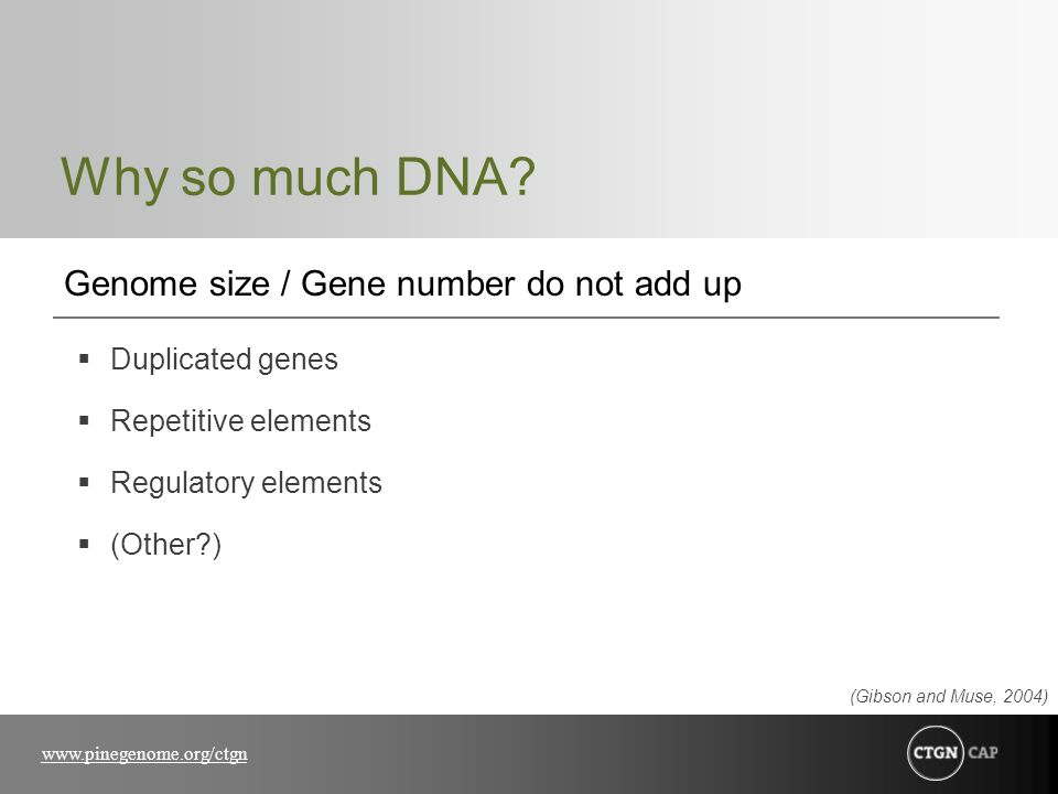 Why so much DNA Genome size / Gene number do not add up