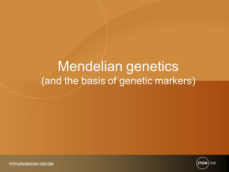 Mendelian genetics (and the basis of genetic markers)