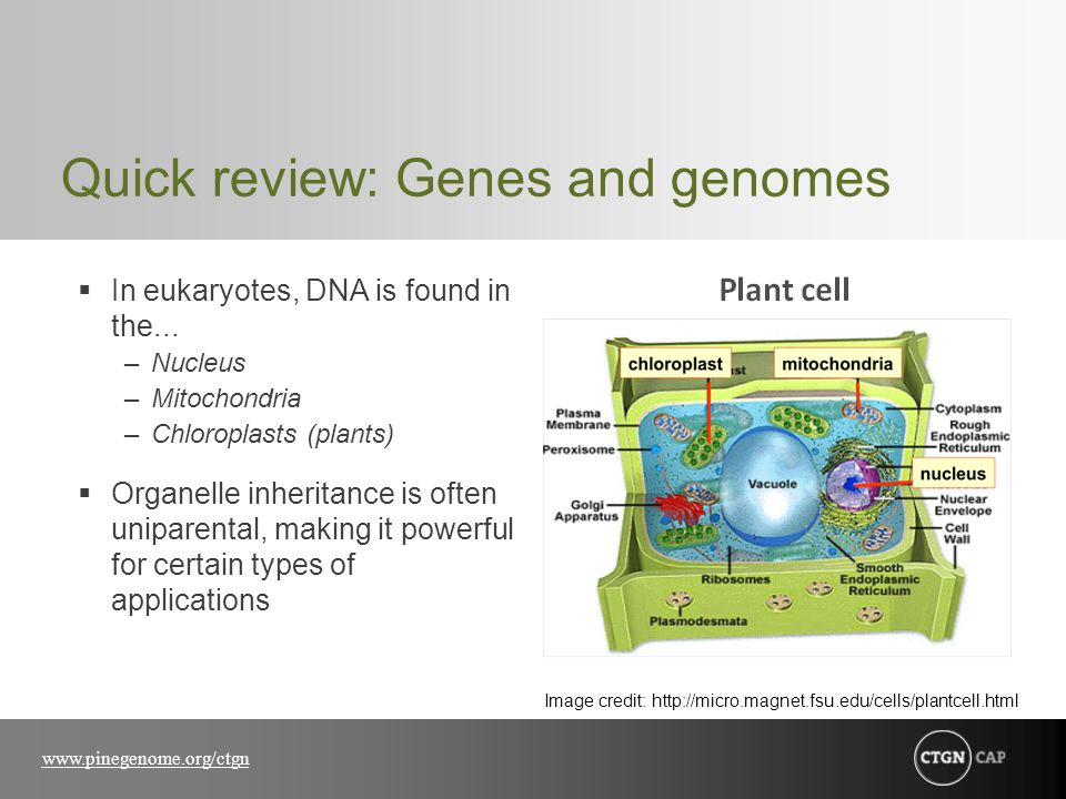 Quick review: Genes and genomes