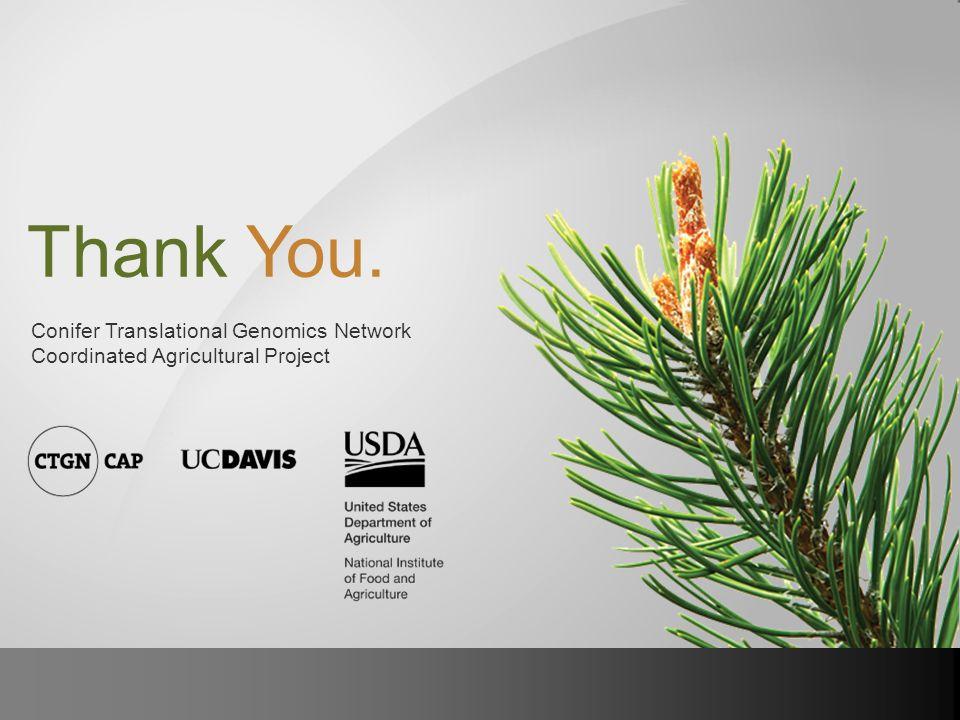 Thank You. Conifer Translational Genomics Network