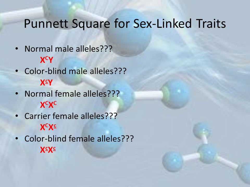 Punnett Square for Sex-Linked Traits