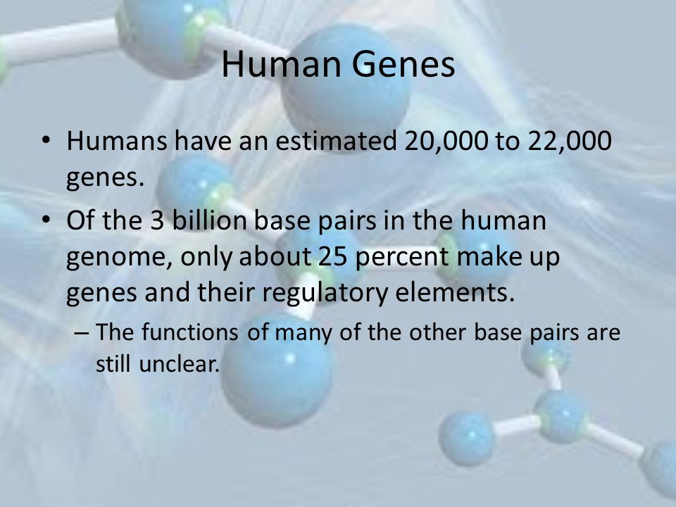 Human Genes Humans have an estimated 20,000 to 22,000 genes.
