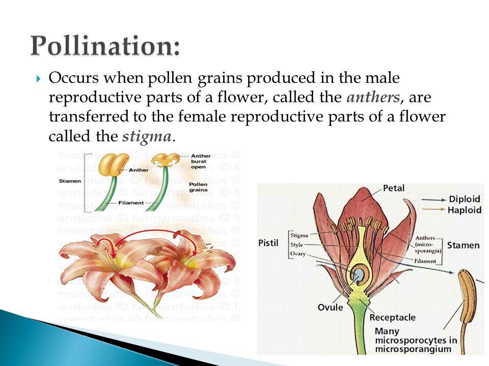 Pollination: