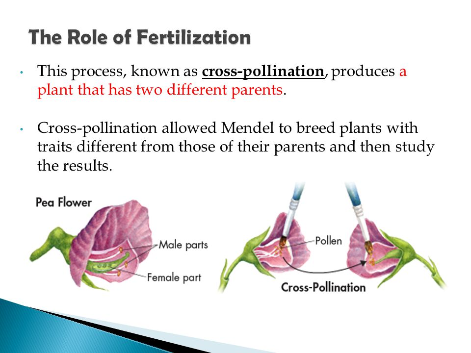 The Role of Fertilization