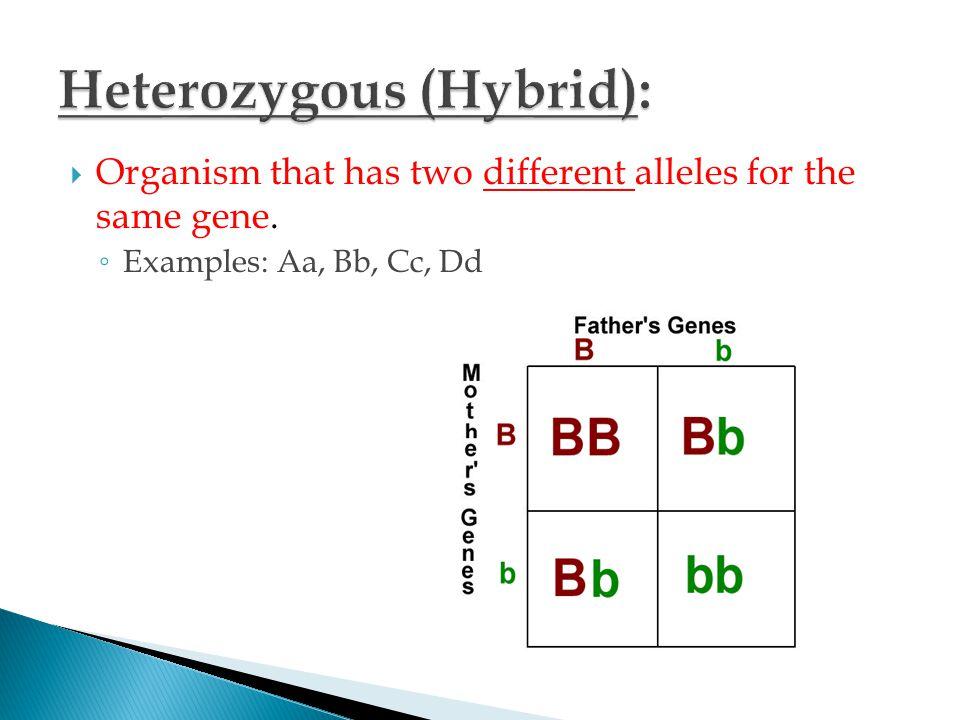 Heterozygous (Hybrid):