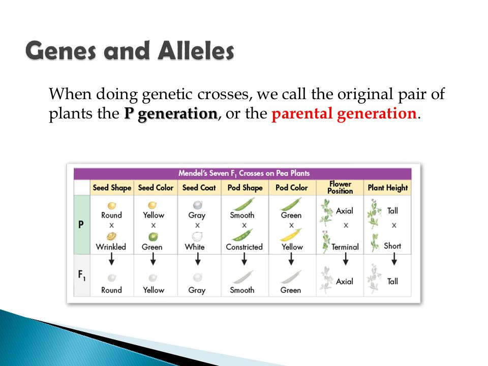 Genes and Alleles When doing genetic crosses, we call the original pair of plants the P generation, or the parental generation.