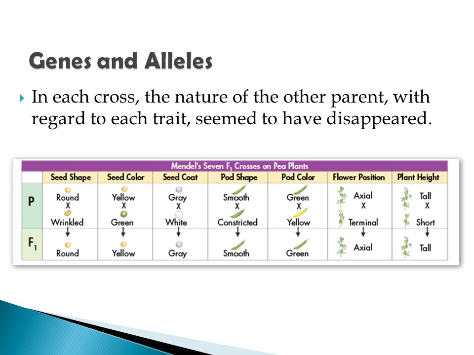 Genes and Alleles In each cross, the nature of the other parent, with regard to each trait, seemed to have disappeared.