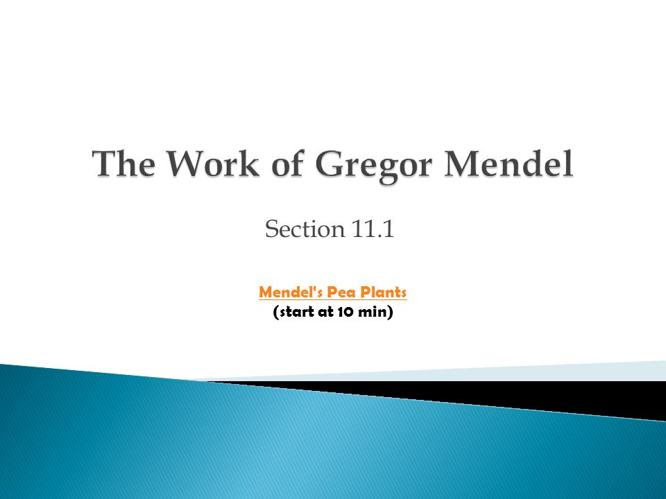 The Work of Gregor Mendel