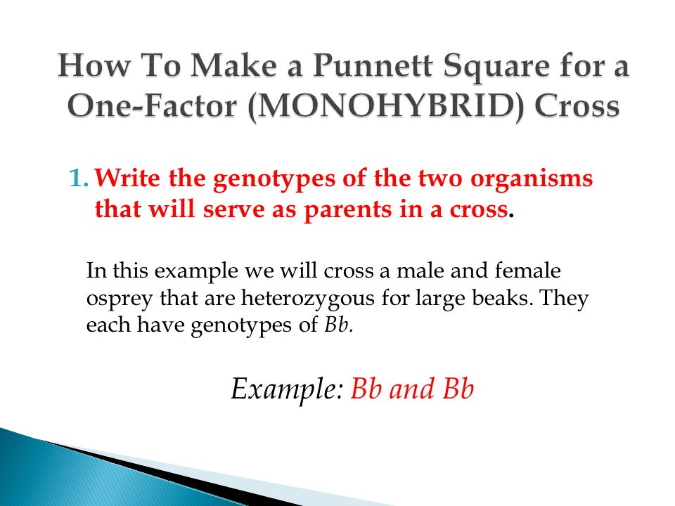 How To Make a Punnett Square for a One-Factor (MONOHYBRID) Cross