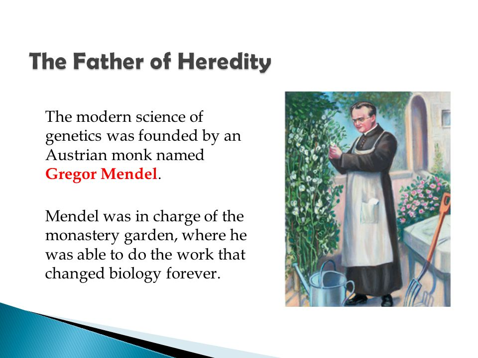 The Father of Heredity The modern science of genetics was founded by an Austrian monk named Gregor Mendel.