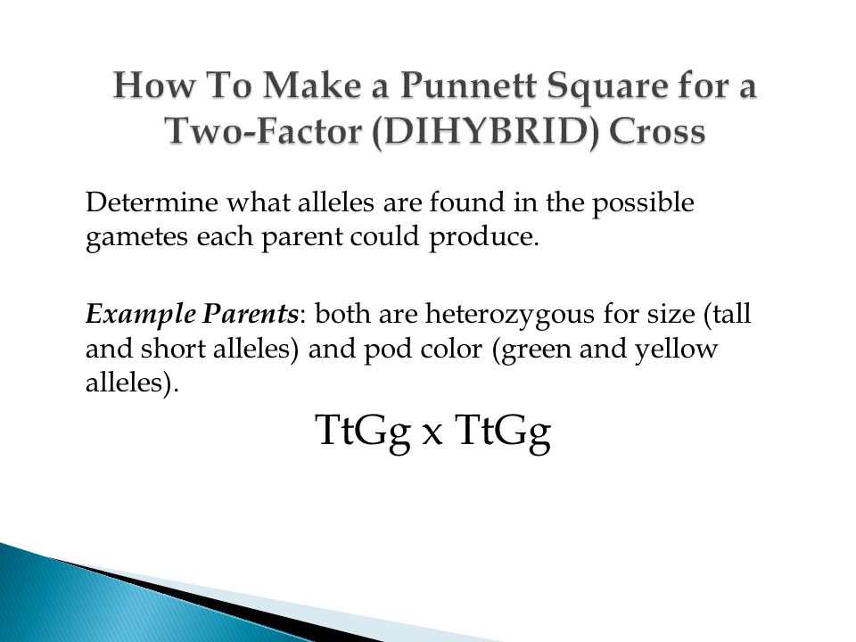 How To Make a Punnett Square for a Two-Factor (DIHYBRID) Cross