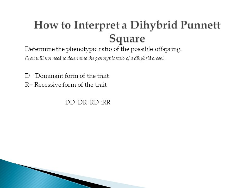 How to Interpret a Dihybrid Punnett Square