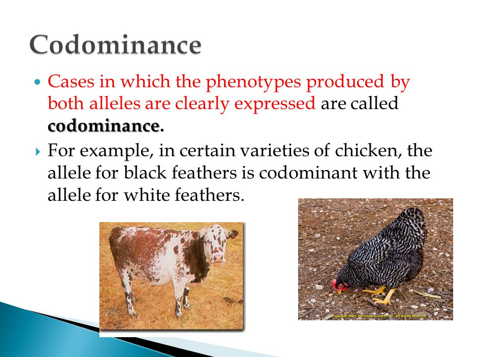 Codominance Cases in which the phenotypes produced by both alleles are clearly expressed are called codominance.