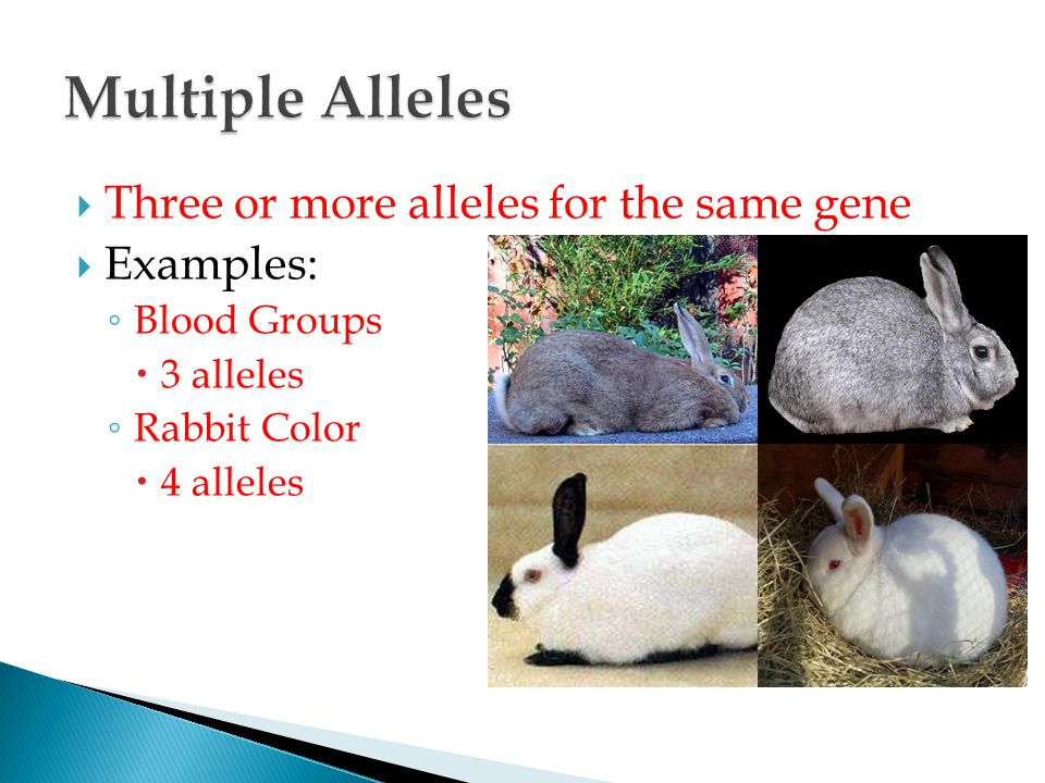 Introduction to Genetics - ppt video online download