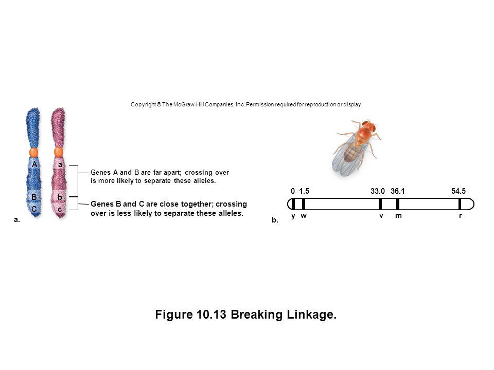 Figure 10.13 Breaking Linkage.
