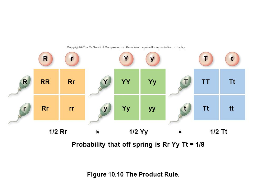 Probability that off spring is Rr Yy Tt = 1/8