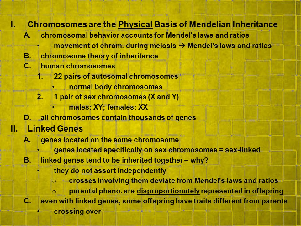 Chromosomes are the Physical Basis of Mendelian Inheritance