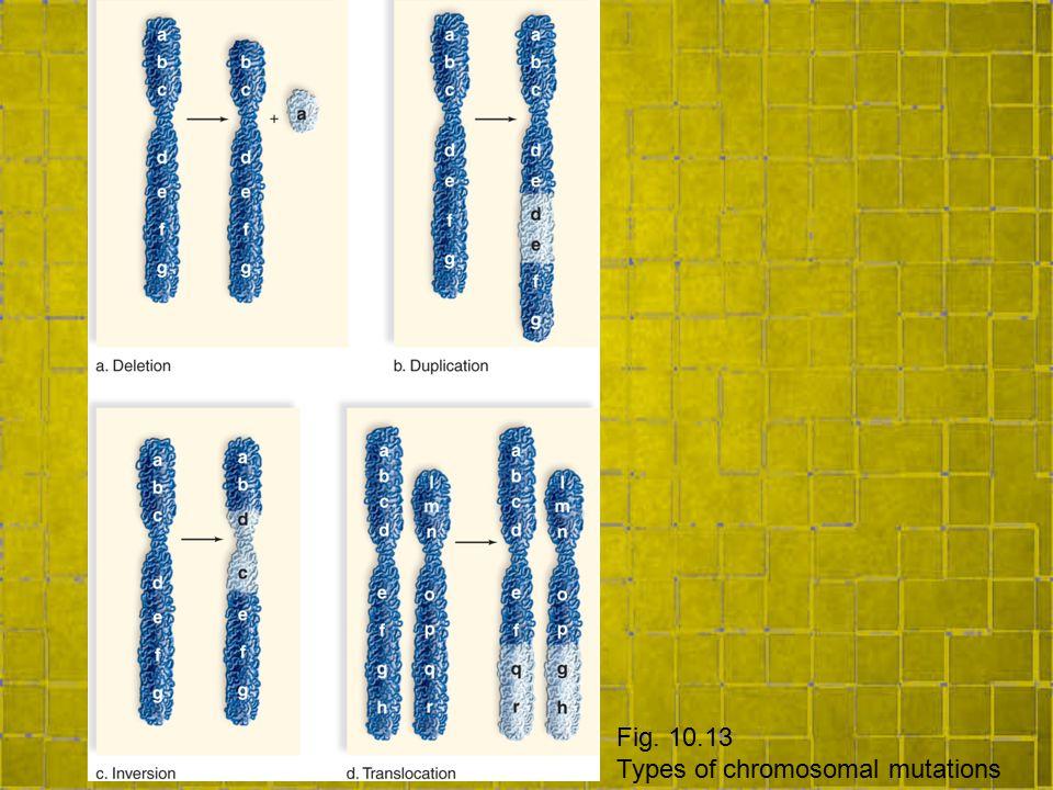 Fig. 10.13 Types of chromosomal mutations