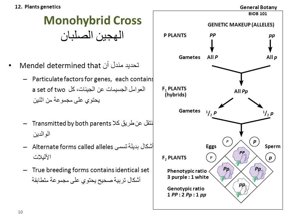 Monohybrid Cross الهجين الصلبان