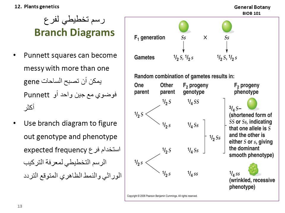 رسم تخطيطي لفرع Branch Diagrams