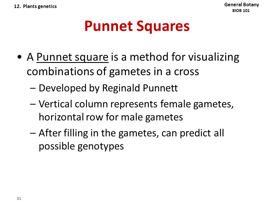 12. Plants genetics General Botany. BIOB 101. Punnet Squares. A Punnet square is a method for visualizing combinations of gametes in a cross.