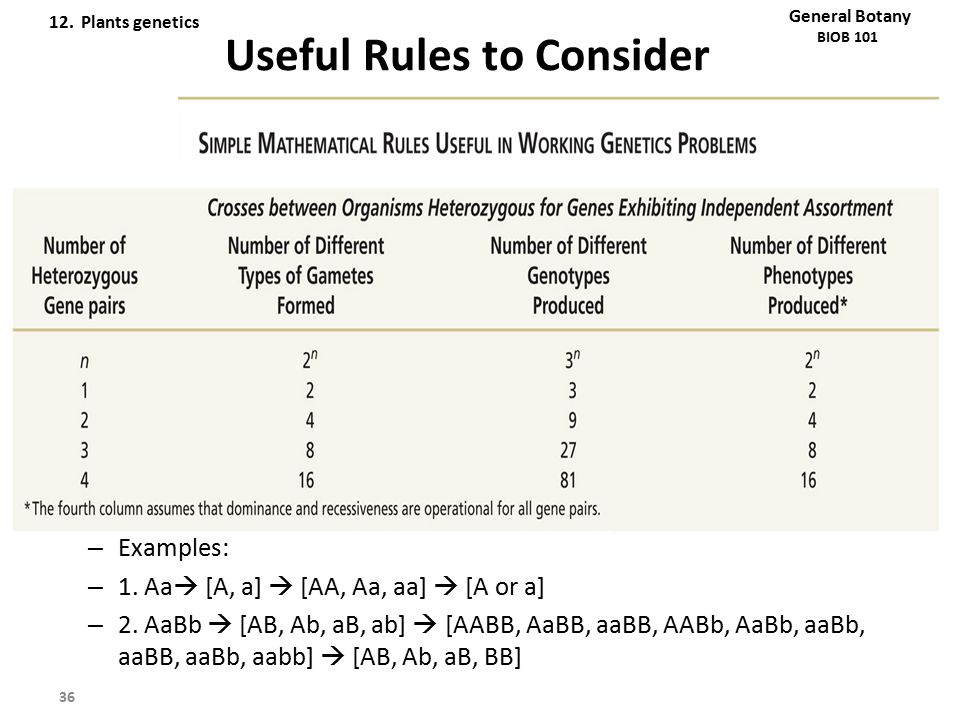 Useful Rules to Consider