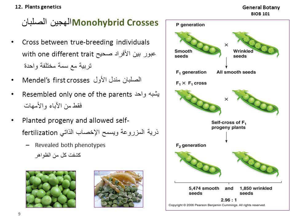 Monohybrid Crossesالهجين الصلبان