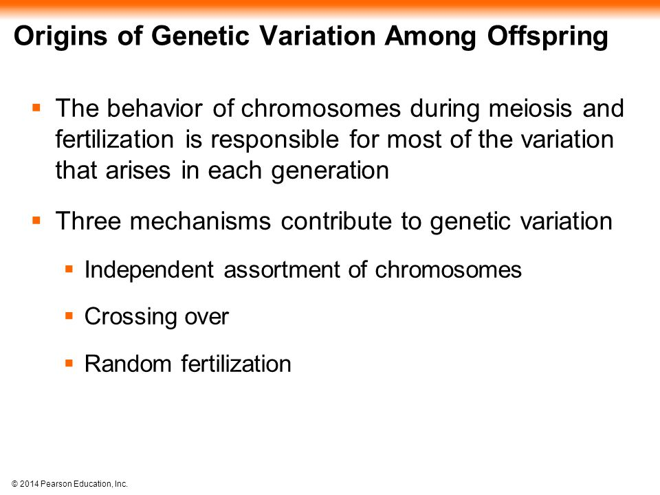 Origins of Genetic Variation Among Offspring