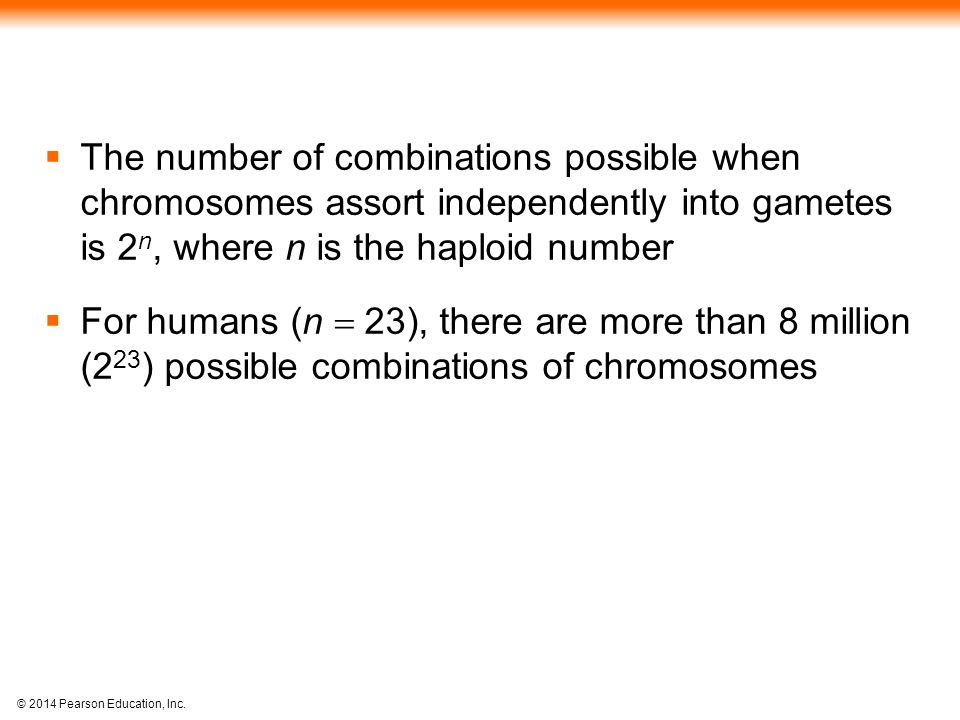 The number of combinations possible when chromosomes assort independently into gametes is 2n, where n is the haploid number