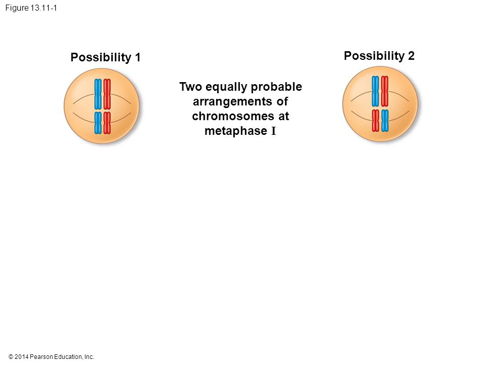 Possibility 1 Possibility 2 Two equally probable arrangements of