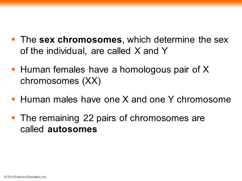 The sex chromosomes, which determine the sex of the individual, are called X and Y