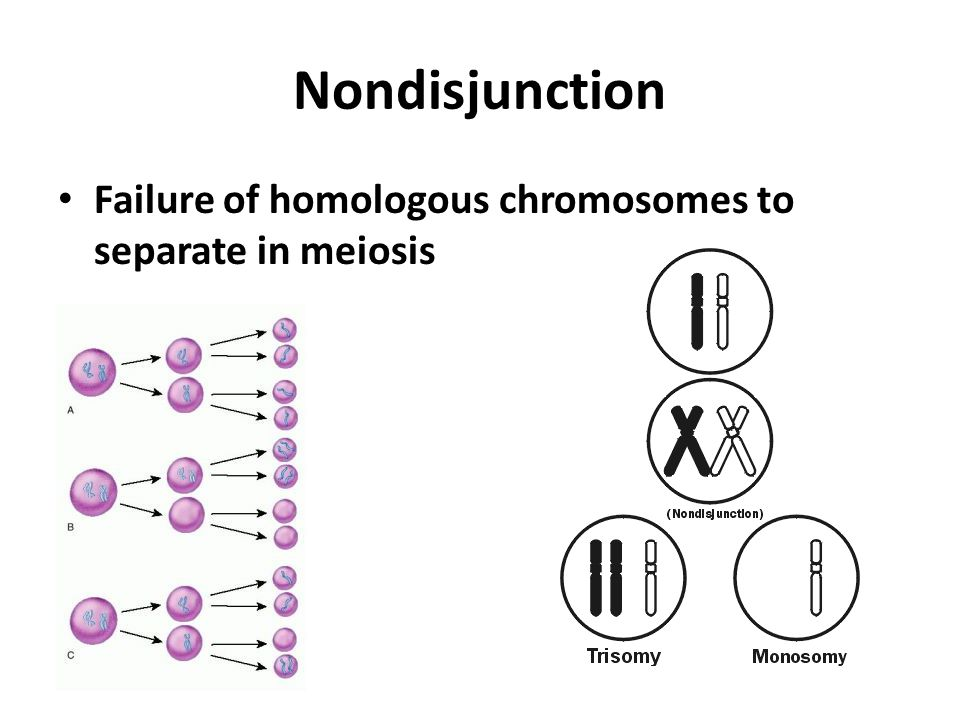 Nondisjunction Failure of homologous chromosomes to separate in meiosis