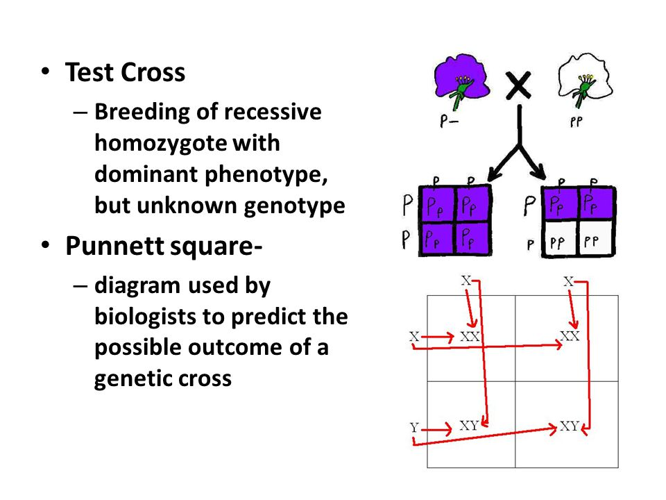 Genetics. - ppt download
