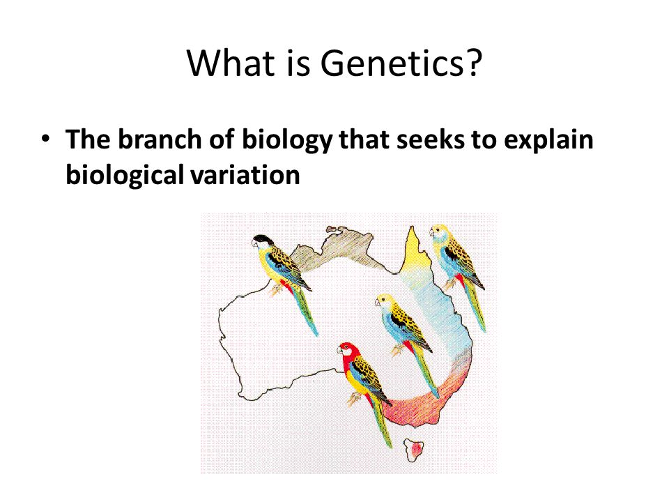 What is Genetics The branch of biology that seeks to explain biological variation