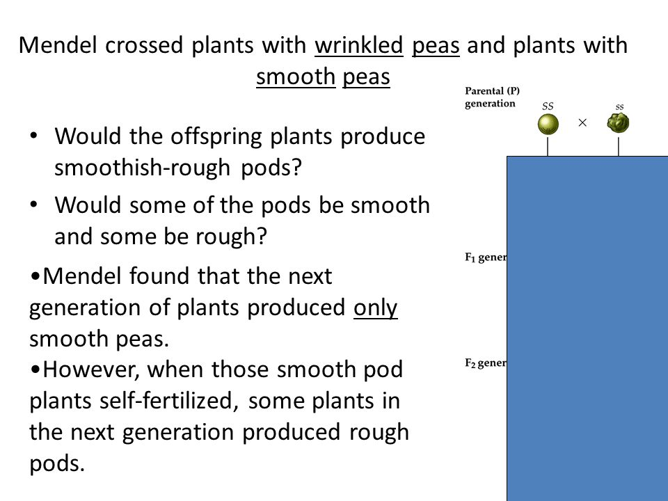 Mendel crossed plants with wrinkled peas and plants with smooth peas