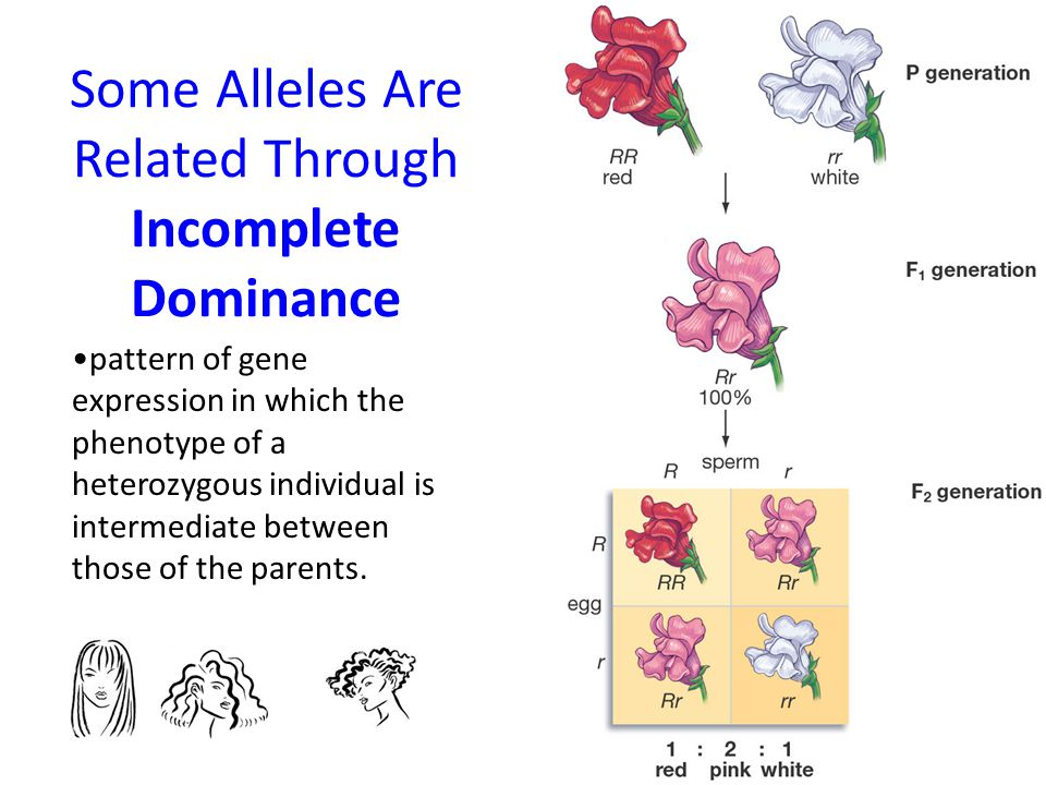 Some Alleles Are Related Through Incomplete Dominance