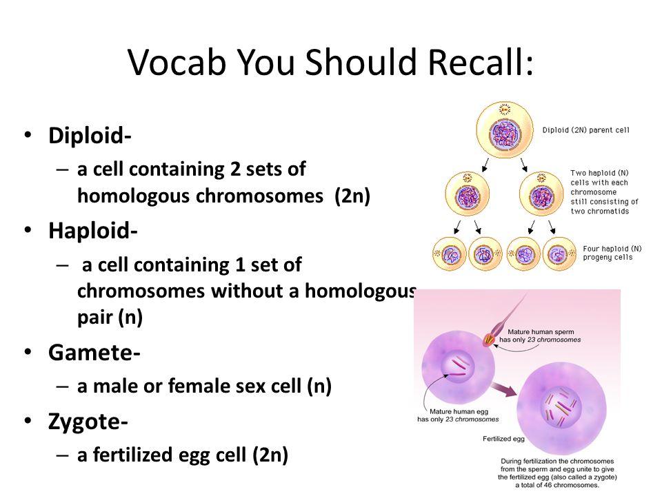 Vocab You Should Recall: