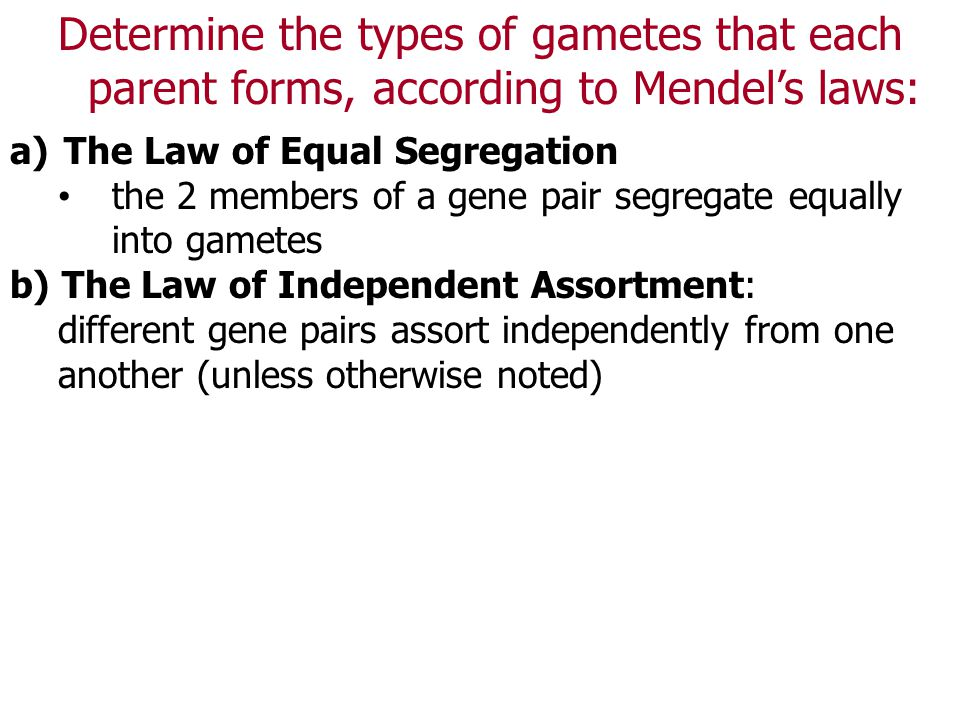 Determine the types of gametes that each parent forms, according to Mendel's laws: