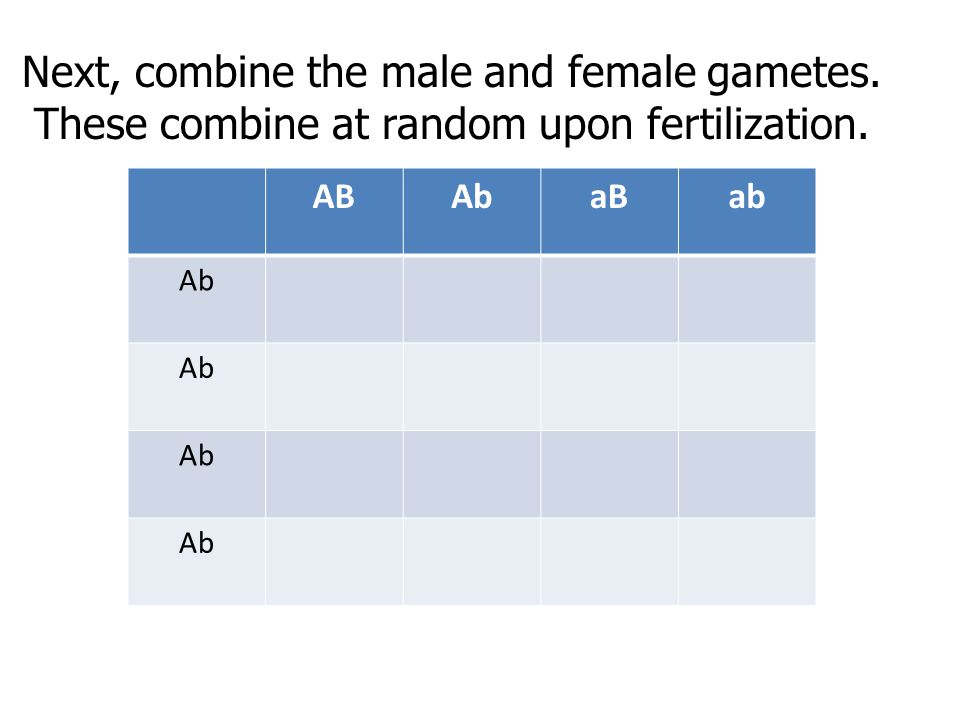 Next, combine the male and female gametes.