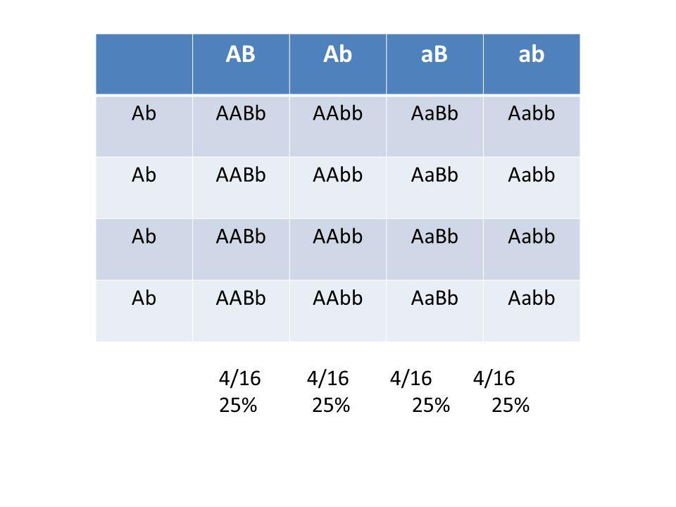 AB Ab. aB. ab. AABb. AAbb. AaBb. Aabb.
